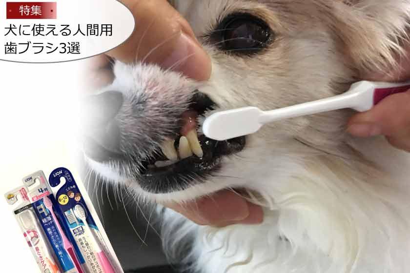 犬用歯ブラシを人間用で代用