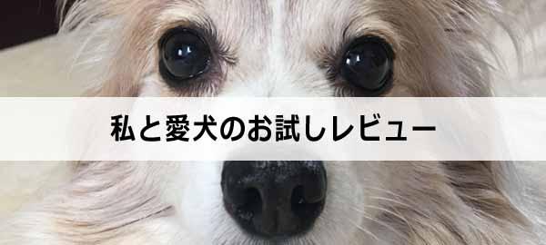 愛犬のお試し
