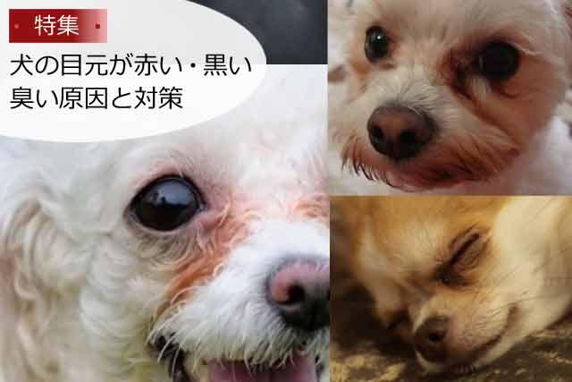 犬の目元が赤い・黒い