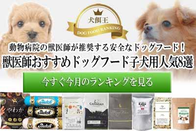 獣医師おすすめドッグフード子犬用人気8選!